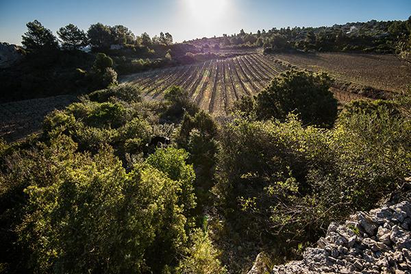 vignes garrigues mavit